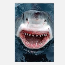 great white shark Postcards (Package of 8)