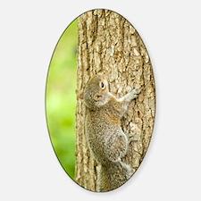 ipadMini_Squirrel_1 Decal