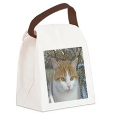 Tempe Canvas Lunch Bag