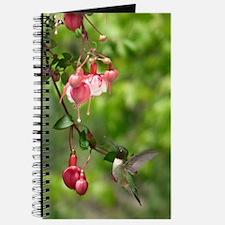 Black-chinned hummingbird Journal