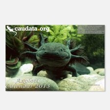 Axolotl Postcards (Package of 8)