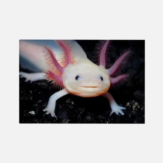 Axolotl Rectangle Magnet