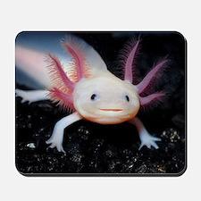 Axolotl Mousepad
