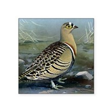 "Four Banded Sand Grouse Square Sticker 3"" x 3"""