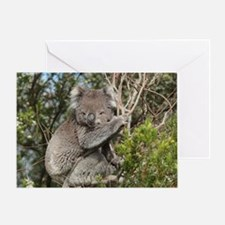 koala12 Greeting Card
