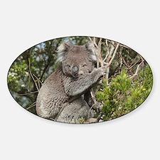 koala12 Decal