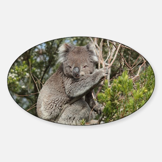 koala12 Sticker (Oval)