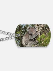 koala12 Dog Tags