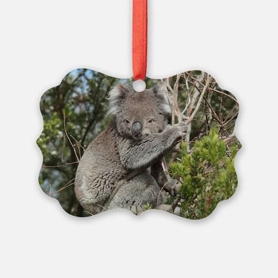 koala12 Ornament