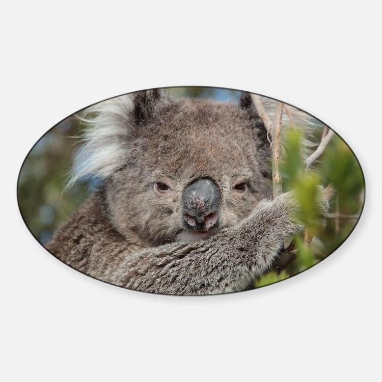 Koala Bear Sticker Designs