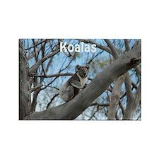 Koala Cover Rectangle Magnet