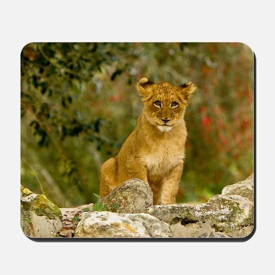 Lion Cub Mousepad