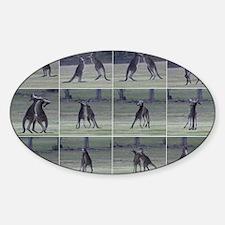 kangaroo8 Sticker (Oval)