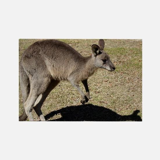 Kangaroo1 Rectangle Magnet