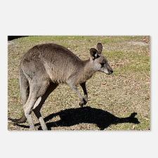 Kangaroo1 Postcards (Package of 8)
