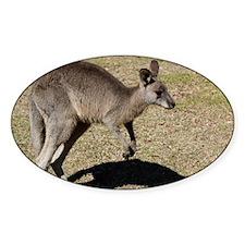 Kangaroo1 Decal