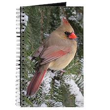 Female Cardinal Journal