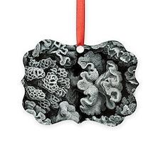 Botanical Coral Ornament