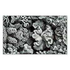 Botanical Coral Decal