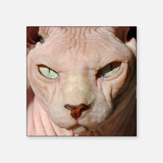 "sphynx_eyes Square Sticker 3"" x 3"""