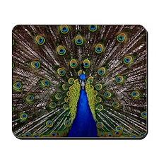 Peacock bird Mousepad