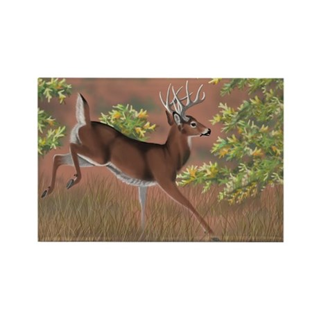 Whitetail Buck Rectangle Magnet
