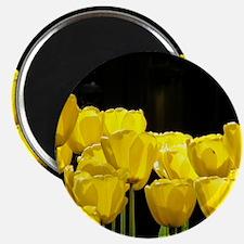 Yellow Tulips Magnet