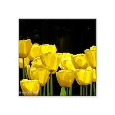 "Yellow Tulips Square Sticker 3"" x 3"""