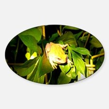 Frog in Spring Decal