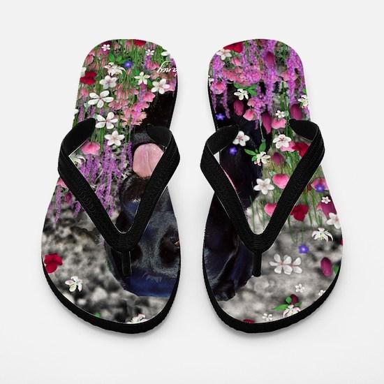 Abby the Black Labrador in Flowers Flip Flops