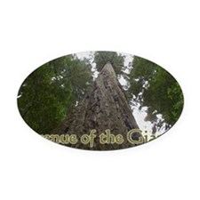 Founder's Tree - Avenue of the Gia Oval Car Magnet