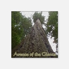 "Founders Tree Tall - Avenue Square Sticker 3"" x 3"""