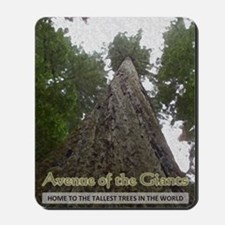 Founders Tree Tall - Avenue of the Giant Mousepad