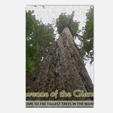 Founders Tree Tall - Aven Postcards (Package of 8)