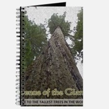 Founders Tree Tall - Avenue of the Giants Journal