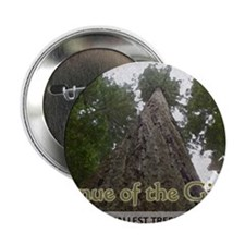 "Founder's Tree Wide -  Avenue of the  2.25"" Button"