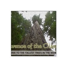 "Founder's Tree Wide -  Aven Square Sticker 3"" x 3"""