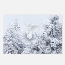 Snowy Owl in Blizzard Postcards (Package of 8)