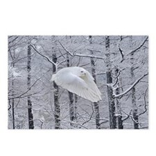 Snowy Owl, Praying Wings Postcards (Package of 8)