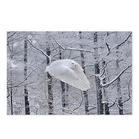 Snowy Owl, Praying Wings Postcards (Package of 8)