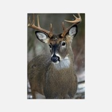 10 point buck Rectangle Magnet