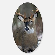 10 point buck Decal