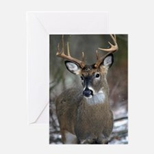 10 point buck Greeting Card