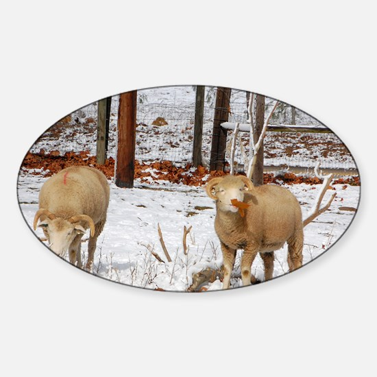 Ewes enjoying Leaves in Snow Sticker (Oval)