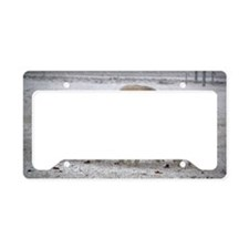 Four Ewes in Snowshower License Plate Holder