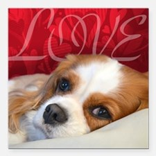 "Cavalier King charles Sp Square Car Magnet 3"" x 3"""