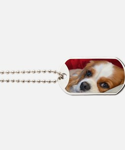 Blenheim Cavalier King Charles Spaniel Dog Tags