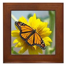 Monarch Butterfly Framed Tile
