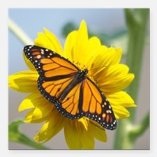 """Monarch Butterfly Square Car Magnet 3"""" x 3"""""""