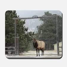 Elk in Estes Park Colorado Mousepad